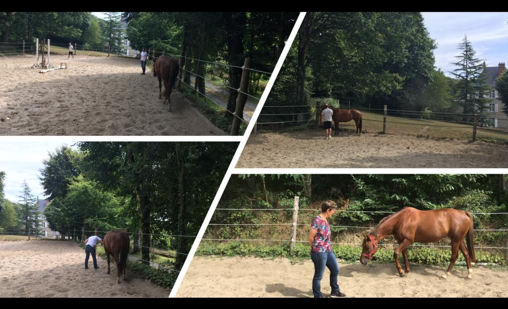 Horse coaching avec Ghislaine Steven et Véro