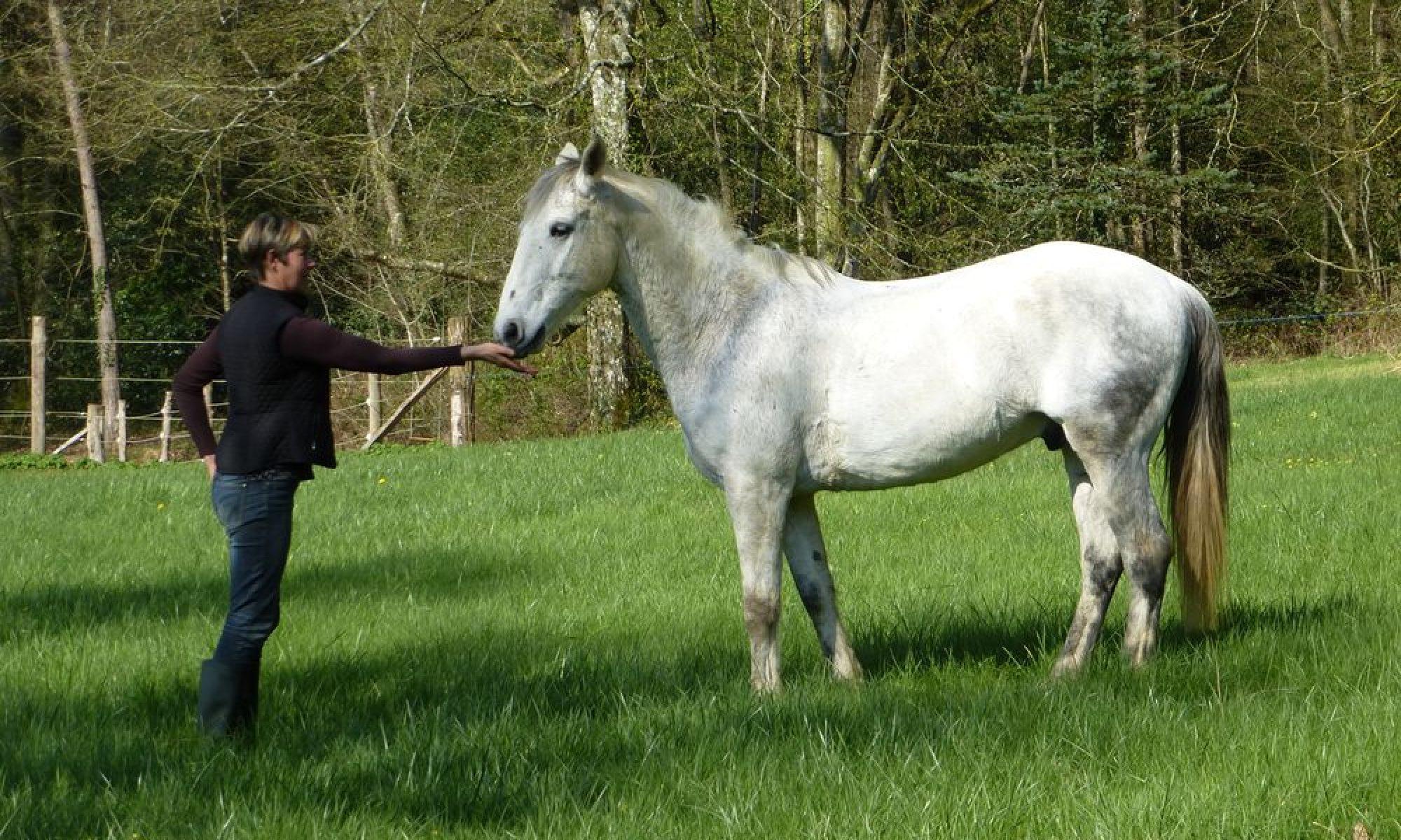 LE HORSE COACHING L'excellence autrement